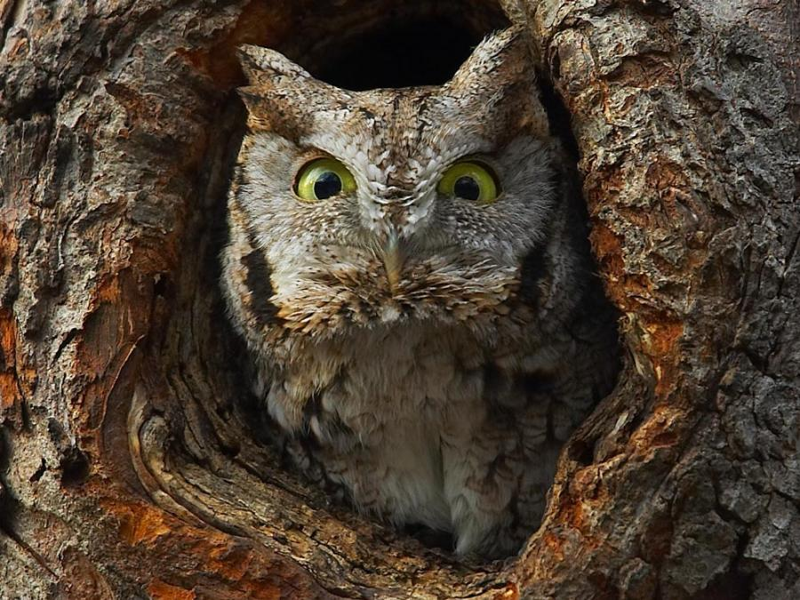 I'm son angry with you, twit twoo!