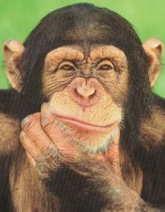 Enda would be more afraid of a chimp in the Dail chamber than one of his own backbenchers. And he'd work for peanuts.
